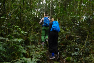 gorilla hiking in volcanoes np