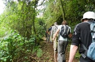 17 Days Nyirangongo Hiking & Gorillas