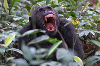 5 Days Rwanda Gorillas & Chimpanzees