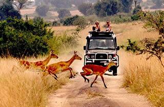 14 Days Uganda Rwanda Safari Holiday