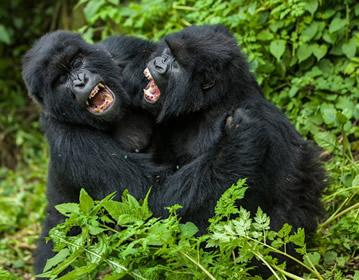 gorilla trek Africa