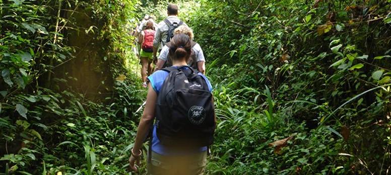 gorilla-trek-africa
